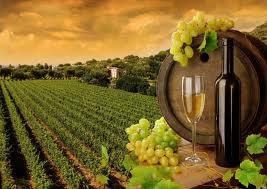 проволока для виноградных шпалер