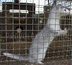 Клетки из сетки сварной оцинкованной для животных и птиц
