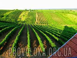 проволока для виноградников